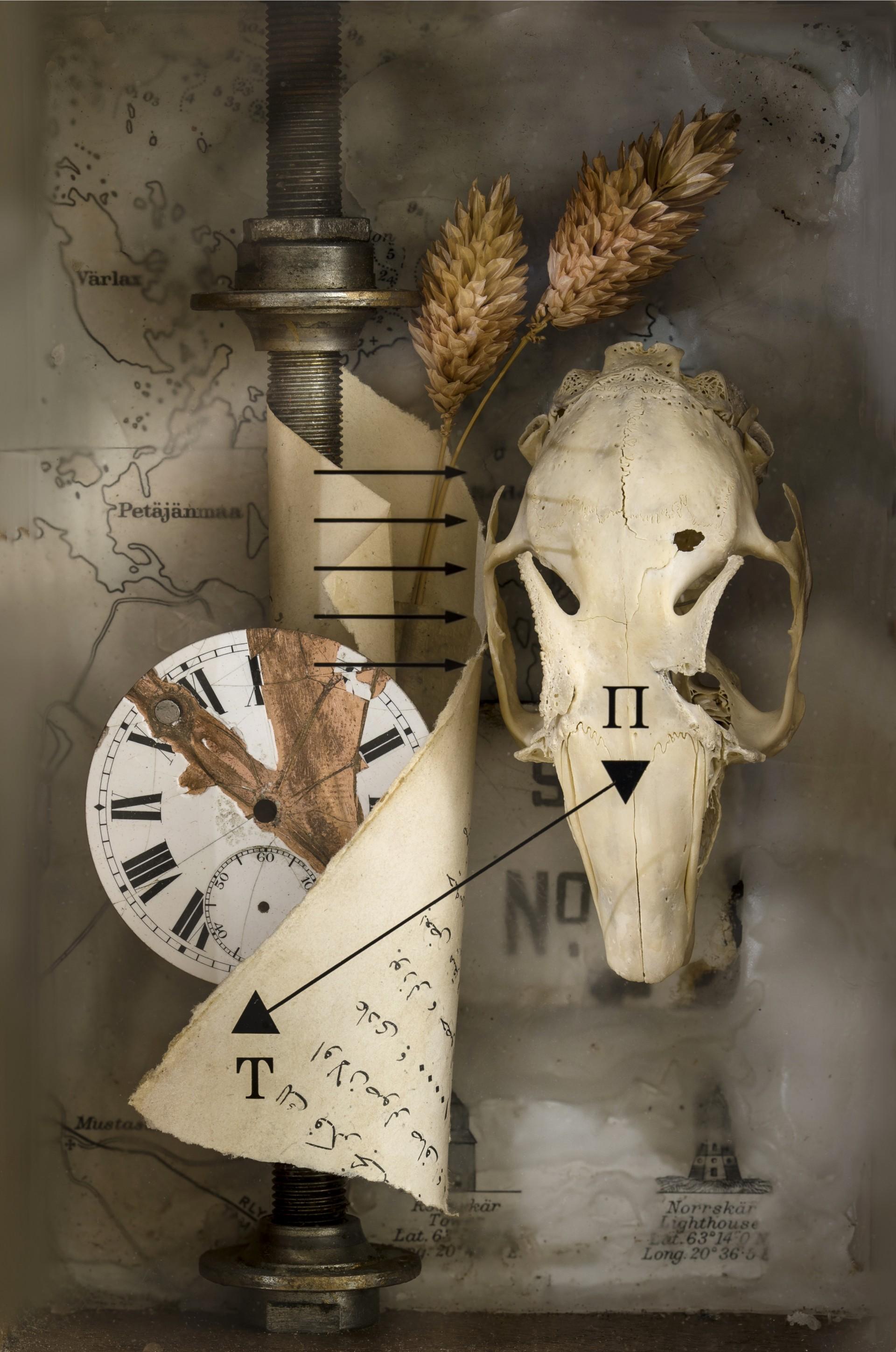 Peter Marshall Photography Bird skull